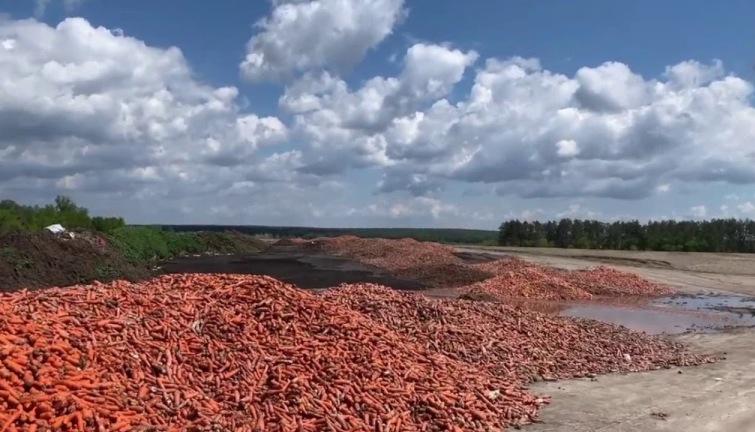 Обанкротившийся из-за карантина фермер выбросил тонны испорченной ...